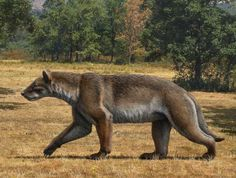 'Beardog' Discovery oOffers Clues to How Canines Evolved