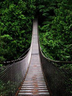 hanging bridge into canopy rain forest