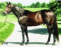 1996 KentucKy Derby Winner,  Grindstone