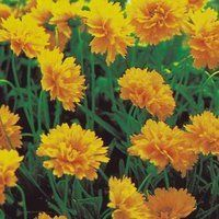 Plants sloped areas on pinterest perennials sun and for Plants that need little care