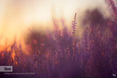 Late summer mood by sandra_bartocha. Please Like http://fb.me/go4photos and Follow @go4fotos Thank You. :-)