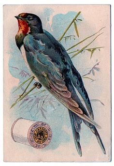 Advertising card for J & P Coats thread. This one has beautiful Swallow Bird on the front of it. On the back is a spool of thread.