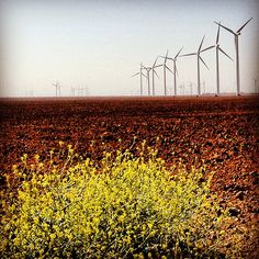 Wind Farm Invenergy Windmills Snyder Texas IMG_6863 Snyder Texas, Wind Farms, Wind Of Change, West Texas, Windmills, Yellow Roses, Ministry, Places To See, Freedom