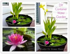 WOW! Look what I have seen today! Such a beautiful container water garden! I haven't thought about having one for my garden, but now I become very interested. From what I have read, you can pretty much use any watertight container to build your own version of water garden. You …