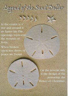 Legend of the Sand Dollar - This makes me smile. My daddy always wore his gold sand dollar necklace. Seaside Beach, Sunset Beach, Beach Art, Seashell Art, Seashell Crafts, Beach Crafts, Seashell Projects, Starfish, Driftwood Projects