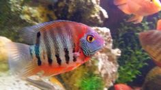 Fotka - Fotky Google Fish, Photo And Video, Pets, Google, Animals, Animales, Animaux, Animal, Animais