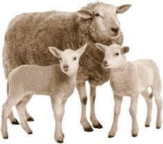 Quality Clip Art of Animals That Live On A Farm: Ewe and Lambs