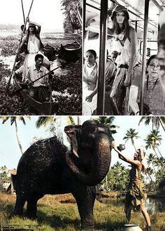 British Vogue in Kerala Kerala, British, Vogue, Horses, Animals, Animales, Animaux, Animal, Animais
