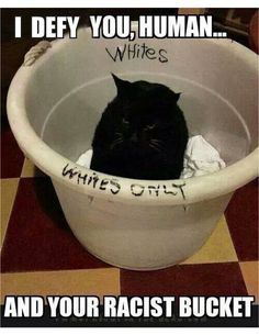 "I'm sorry, this is just funny. Being black my self all i can say is "" Fight the power "" LOL the first REALLY CUTE RACIST I""VE SEEN - but you still have to get out of the white laundry bucket -"