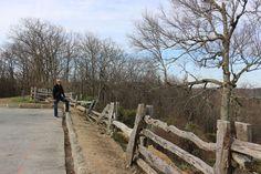 DH On Blue Ridge Parkway