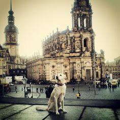 Kathedrale Ss. Trinitatis in Dresden, Sachsen