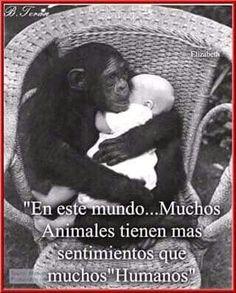 Animales, los buenos sentimientos!!!