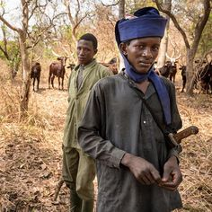 Image by Elliott Woods, @elliottwoods . Central African Republic, 2016   Nomadic cattle herders present one of the most complex challenges to the Chinko nature preserve, in eastern C.A.R. Herders come from nearby villages, and from as far away as Chad and Sudan, and they make extra income by poaching and selling bushmeat. Meanwhile, cattle contribute to erosion and deforestation. Poaching and herding pressure continues to escalate as desertification increases in the Sahel region of central…
