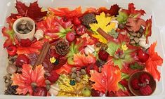 """A busy, busy autumn themed sensory bin! This one seems like it could keep kids exploring for ages! Please note that """"ages"""" in preschool time means maybe 15 minutes or so, give or take."""