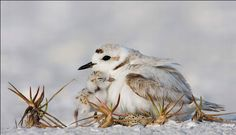 2009 Audubon: Birds in Focus : Discovery Channel
