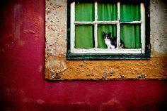 Cat in Lisbon, by Laurent Hunziker