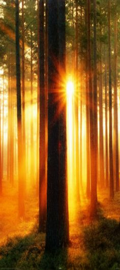 ~ sunlight through the trees ~