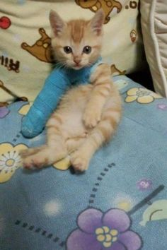 This poor cat broke its leg :( itttsssss ssssoooooo ccccuuuuuutttttteeeee