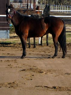My horse, J.J.