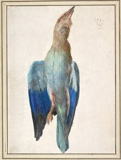 """""""A Blue Roller,"""" 1500 or 1512, watercolor and gouache on vellum.  Courtesy of the Albertina Museum via the National Gallery of Art"""