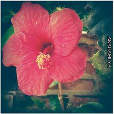 flores de mi jardín. nº1