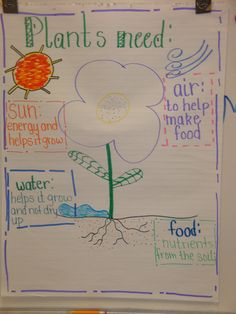 Learning Adventures: Plant Needs
