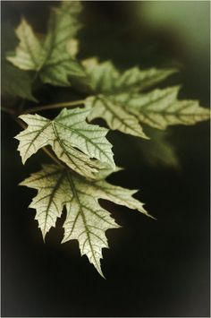 1000 Images About Autumn S Green On Pinterest Autumn