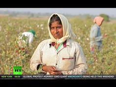 Indian nightmare: GMO killer-cotton (RT Documentary)