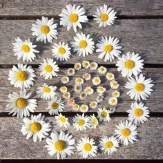 """Sian from fforest (@coldatnight) on Instagram: """"Fresh as a daisy  Daisy the Old English name dægeseage, meaning literally """"day's eye."""" Daisies…"""" Flower Rangoli, Flower Mandala, Flower Art, Indian Wedding Decorations, Flower Decorations, Festival Decorations, Old English Names, Daisy May, Daisies"""