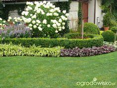 Ogród mały, ale pojemny;) - strona 133 - Forum ogrodnicze - Ogrodowisko Lawn And Garden, Garden Art, Garden Design, Deck Enclosures, Concrete Patio Designs, Raindrops And Roses, Pot Plante, Rose Cottage, Back Gardens