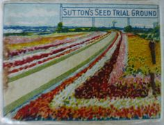 Reverse of Sutton & Sons Book of matches Sutton's Seeds For All Parts of the World The King's Seedsmen, Reading showing Sutton's Seed Trial Ground c 1930s(?)
