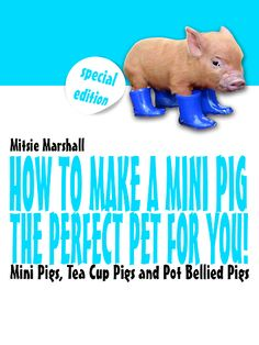 How to Make a Mini Pig The Perfect Pet for You~