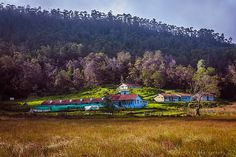 This tiny hamlet called Berijam will give a tough competition to any typical Swiss village for its beautiful environment. Located near Kodaikanal in Tamil Nadu, South India, this hamlet is not accessible to general public. As a passing-by trekker, I was privileged enough to stay there for a night!