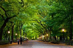 Central Park, NYC - been there a few times & loved it!