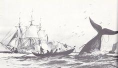 Le patron de la pirogue achève une baleine à coup de lance, le harponneur est passé à l'arrière et dirige la pirogue avec l'aviron de queue ...