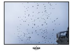 Fly away by Filipe Coelho on YouPic Flies Away, In This Moment, Random, Pictures, Photography, Animals, Photos, Fotografie, Animales