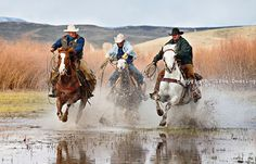 Cowboys And Horses | cowboys-running-horses-in-water-1054a.jpg | Wild Horses and Equine ...