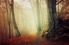 """Ethereal autumn forest photo print - wall art - """"If These Trees Could Talk XXVIII."""" by Zsolt Zsigmond (realityDream) - SKU0051"""