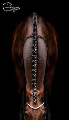 © Fleur Fotografie    Fantastic braids !!    bay english braided mane