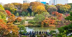 Tokyo Travel Guide, Japan Travel, Attractions In Tokyo, Shinjuku Gyoen, Image Descriptions, 10 Picture, Autumn Trees, Cool Places To Visit, The Good Place