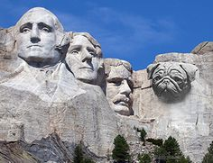 Did you know Mount Rushmore was built to increase tourism to South Dakota? Mont Rushmore, Thomas Jefferson, George Washington, Mount Rushmore South Dakota, Presidential Portraits, Geography For Kids, Secret Rooms, Belle Photo, American History