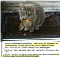 And now you know why cats bring you gross things.