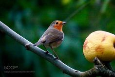 This is my apple ! by ThierryRossier via http://ift.tt/2ghohha