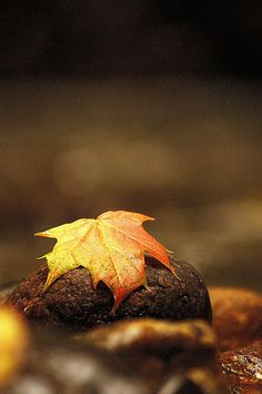 ~Autumn~  Nature's paint brush. . .