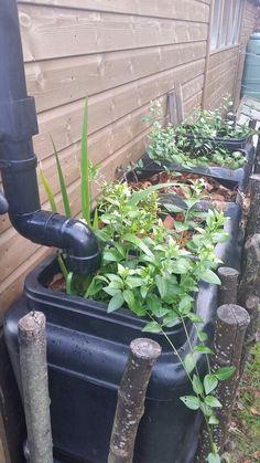 Royal botanic garden edinburgh demonstration garden raingarden planter