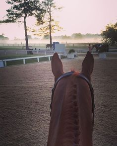 These mornings >>>