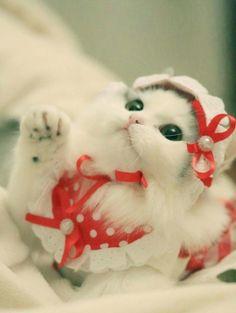Kokoş  tatlım Boncuğum Cute Cats And Kittens, Baby Cats, I Love Cats, Kittens Cutest, Animals And Pets, Baby Animals, Funny Animals, Cute Animals, Pretty Cats