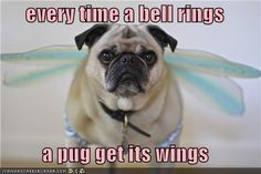 every time a bell rings  a pug get its wings