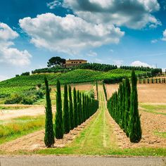 Best Traditional Restaurants in Tuscany | Travel   Leisure