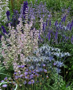 Symphonie bleue, Walled garden, Floors Castle in Scotland
